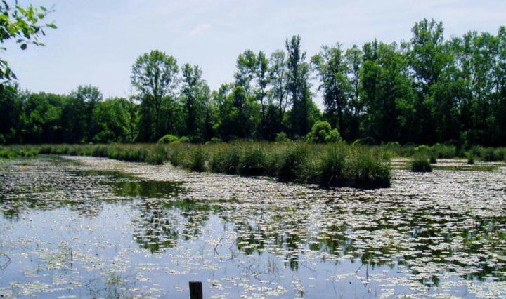 etangs de mepieu, fleuve rhone